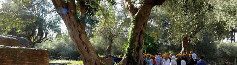 …и вековые оливы